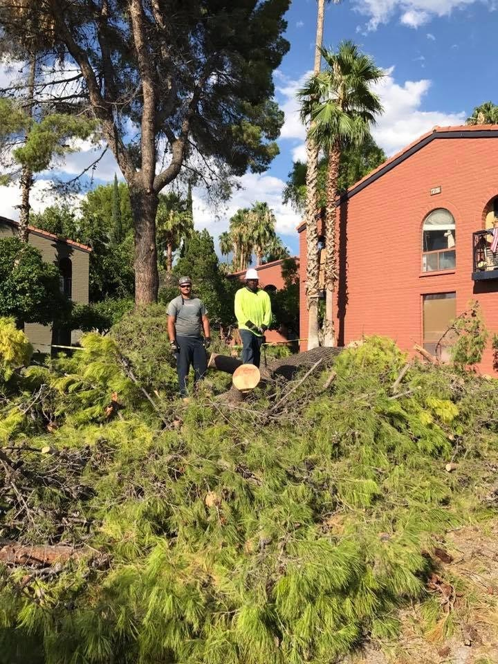 lot clearing image 1