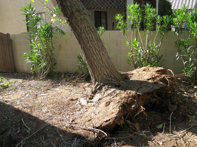 Storm Damage shown in a tree