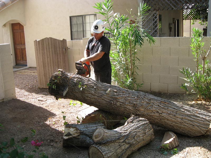Continued removal of a tree due to storm damage