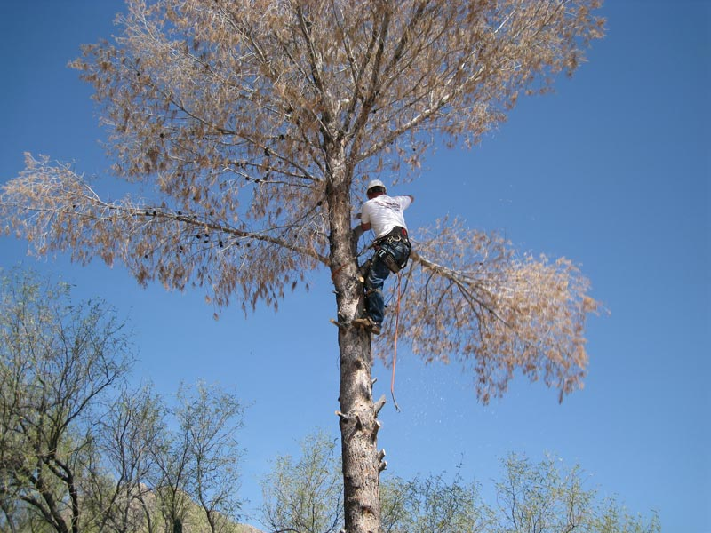 Tree Removal Image 1