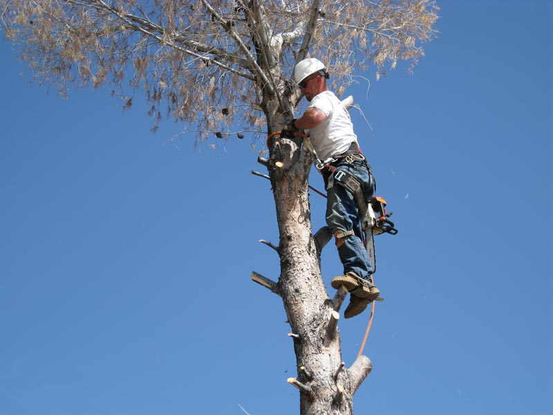Tree Removals Image 2