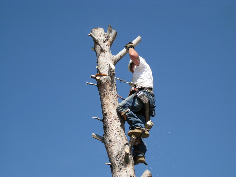 Tree Removals Image 3