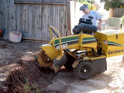 Stump Grinding image 1