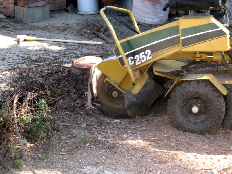 Stump Grinding image 2