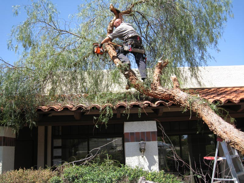 tree trimming image 1
