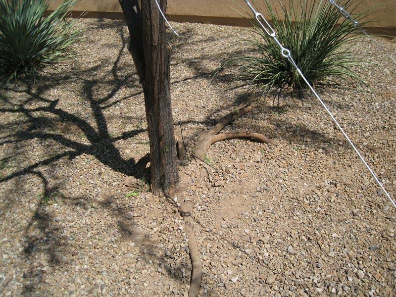 Tree Bracing & Cabling image 2